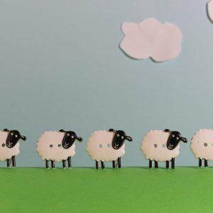 Compressed 5 sheep